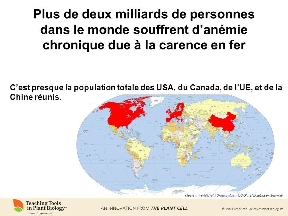 Plus de deux milliards de personnes dans le monde souffrent d'anémie chronique due à la carence en fer