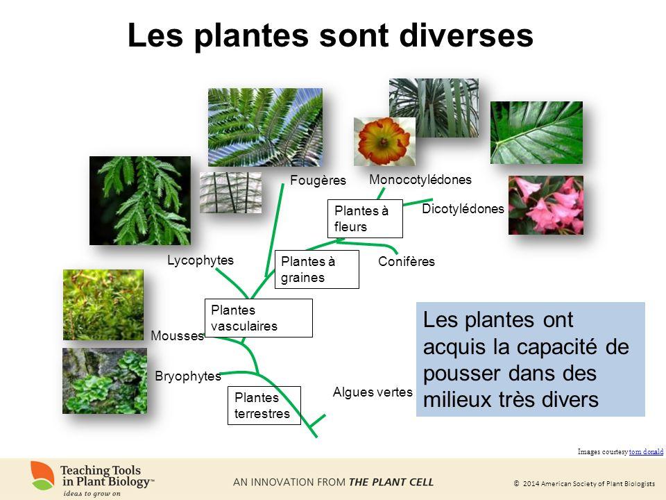 Les plantes sont diverses