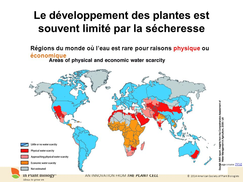 Le développement des plantes est souvent limité par la sécheresse