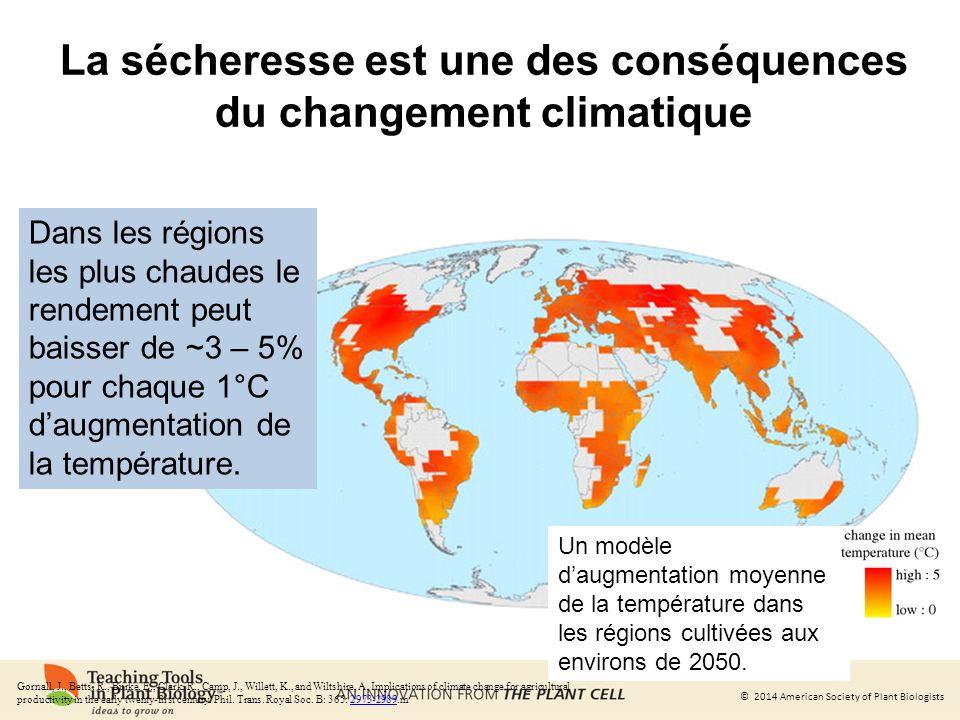 La sécheresse est une des conséquences du changement climatique