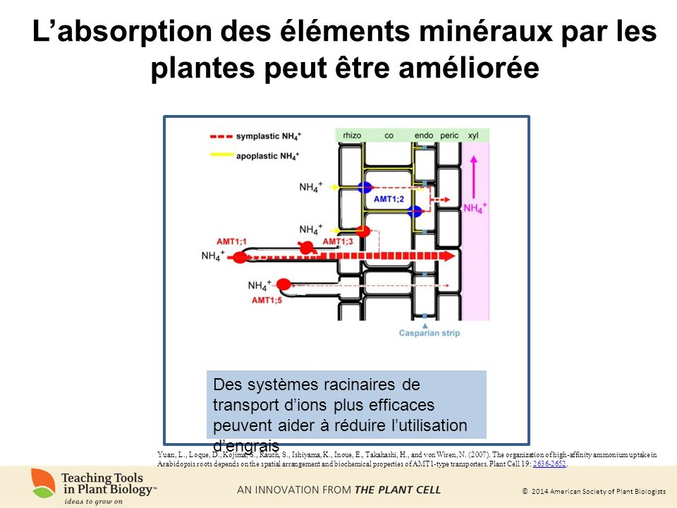 L'absorption des éléments minéraux par les plantes peut être améliorée