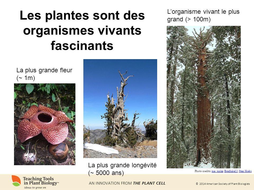Les plantes sont des organismes vivants fascinants