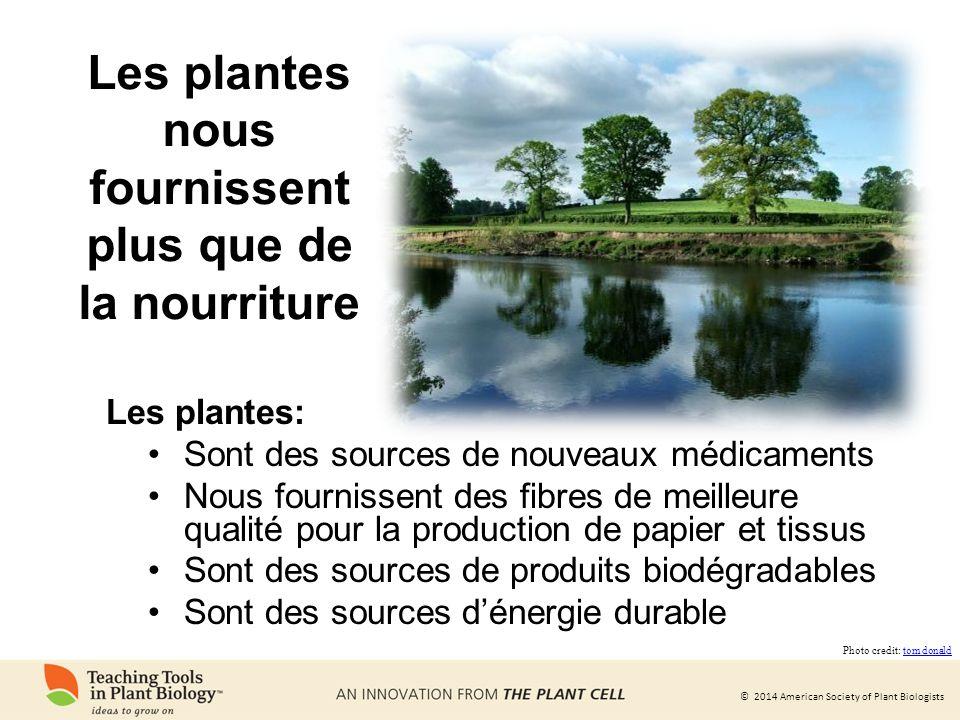 Les plantes nous fournissent plus que de la nourriture