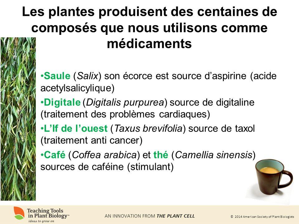 Les plantes produisent des centaines de composés que nous utilisons comme médicaments