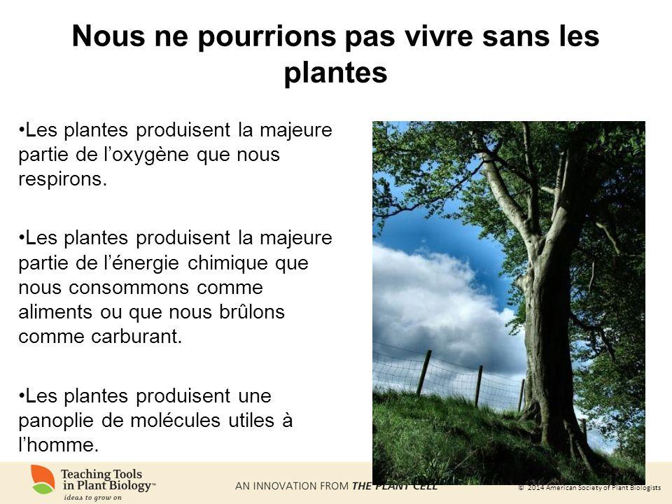 Nous ne pourrions pas vivre sans les plantes