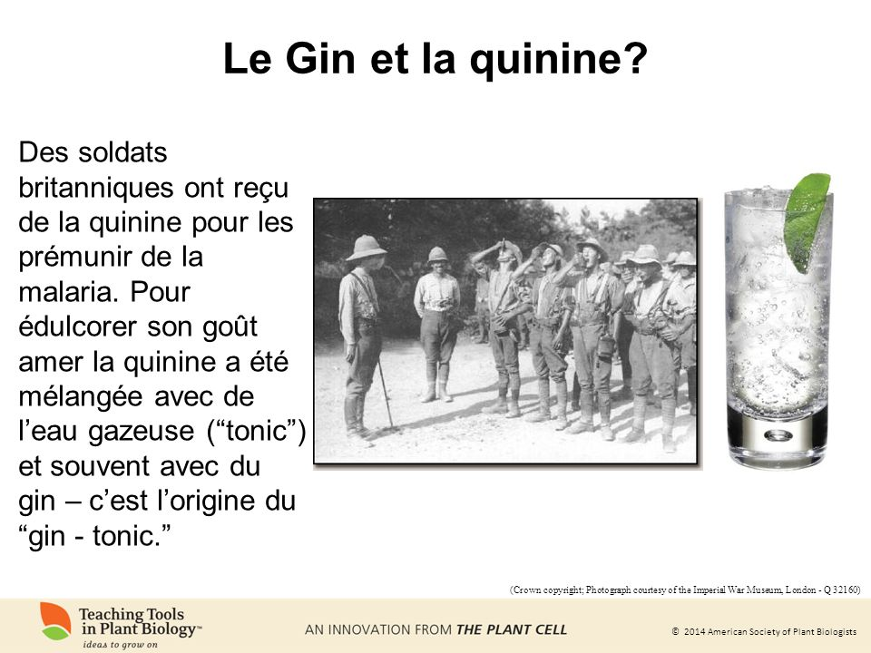 Le Gin et la quinine