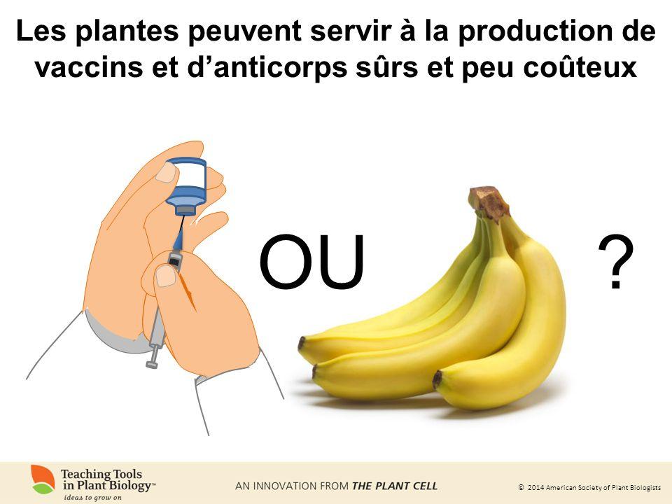 Les plantes peuvent servir à la production de vaccins et d'anticorps sûrs et peu coûteux