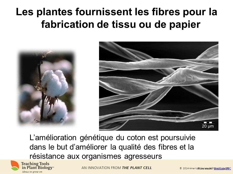 Les plantes fournissent les fibres pour la fabrication de tissu ou de papier