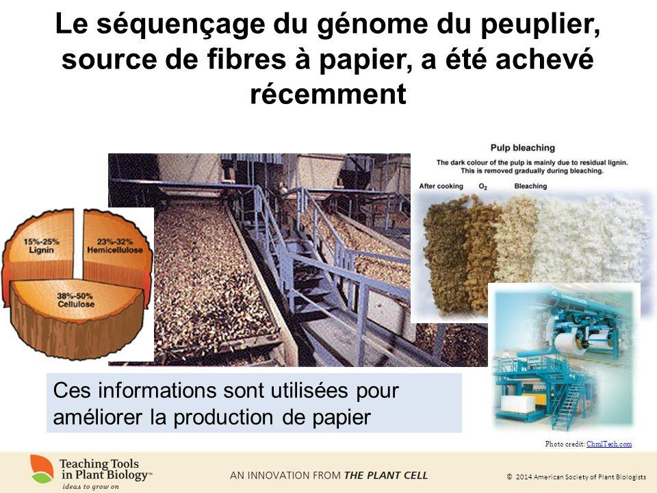 Le séquençage du génome du peuplier, source de fibres à papier, a été achevé récemment