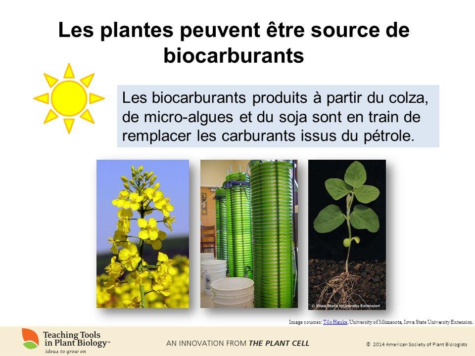 Les plantes peuvent être source de biocarburants