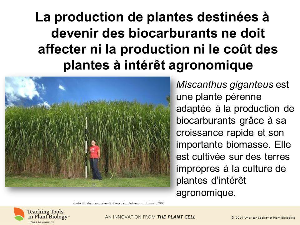 La production de plantes destinées à devenir des biocarburants ne doit affecter ni la production ni le coût des plantes à intérêt agronomique