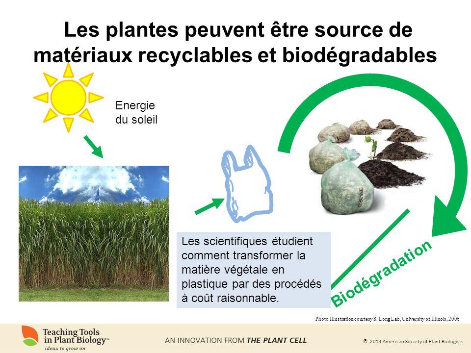Les plantes peuvent être source de matériaux recyclables et biodégradables