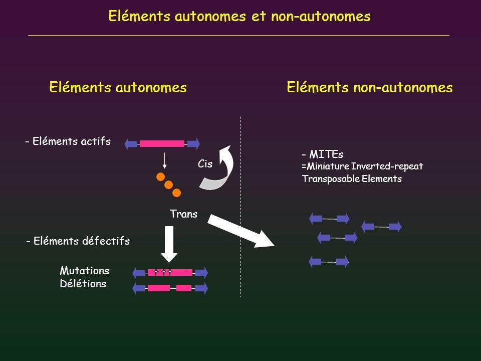 Eléments autonomes et non-autonomes