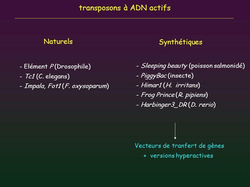 transposons à ADN actifs