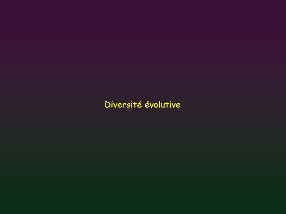 Diversité évolutive Il existe aussi une grande diversité au point de vue des scénarios évolutifs.