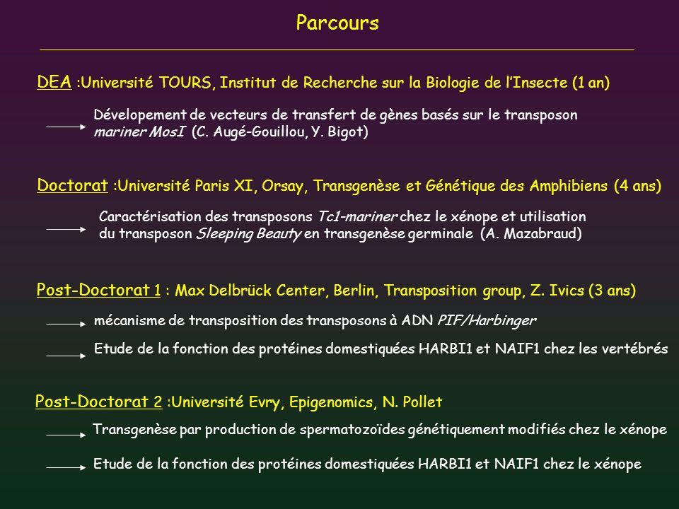 Parcours DEA :Université TOURS, Institut de Recherche sur la Biologie de l'Insecte (1 an)
