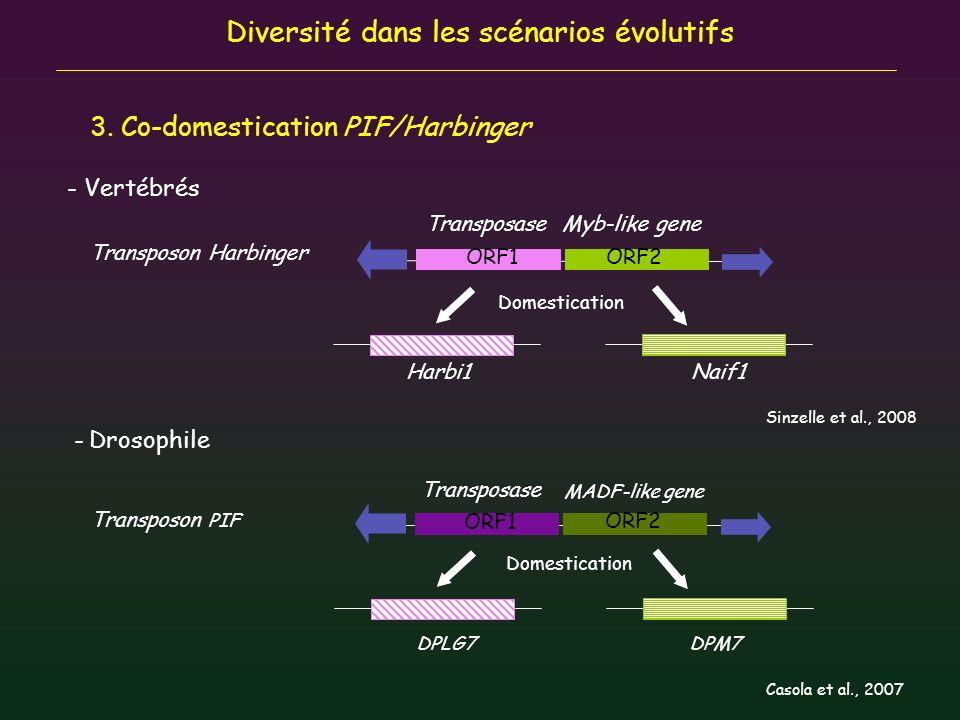 Diversité dans les scénarios évolutifs