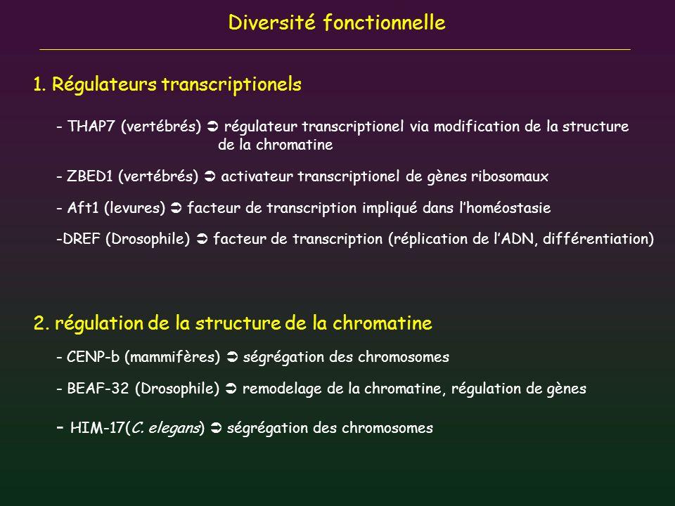 HIM-17(C. elegans)  ségrégation des chromosomes