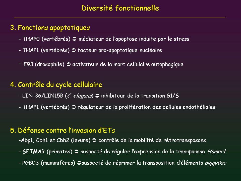 E93 (drosophile)  activateur de la mort cellulaire autophagique