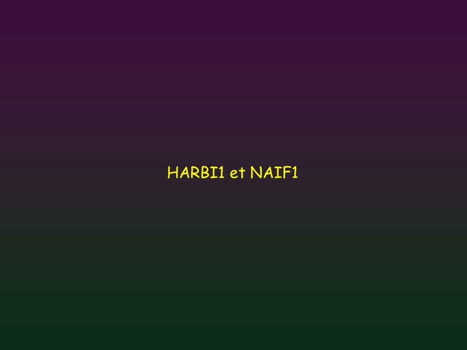HARBI1 et NAIF1