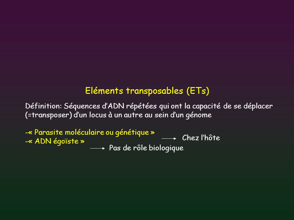 Eléments transposables (ETs)