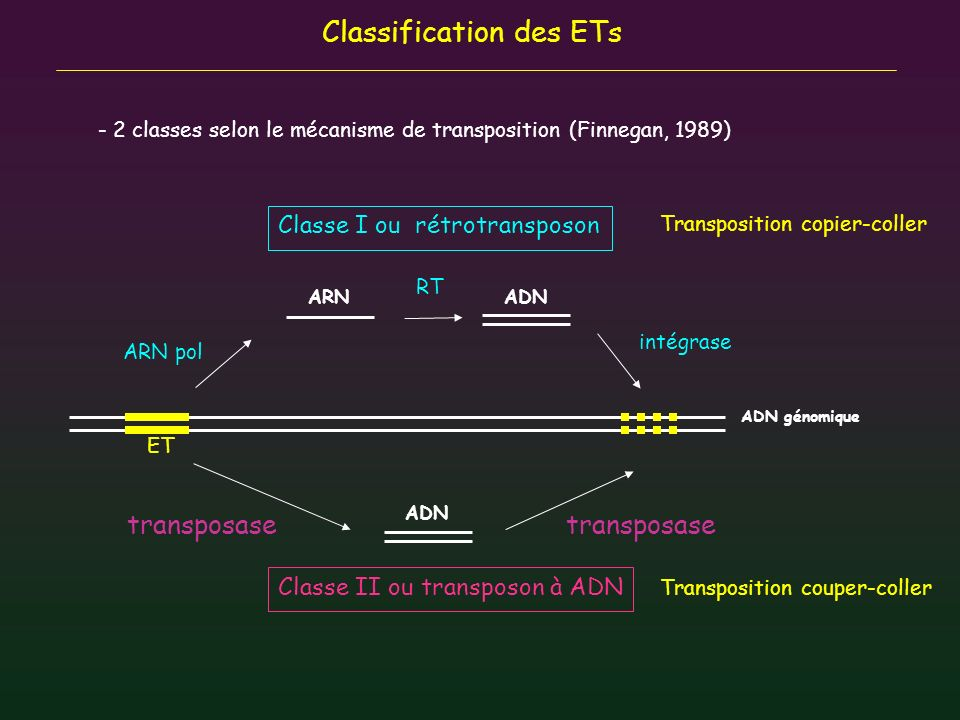 Classification des ETs