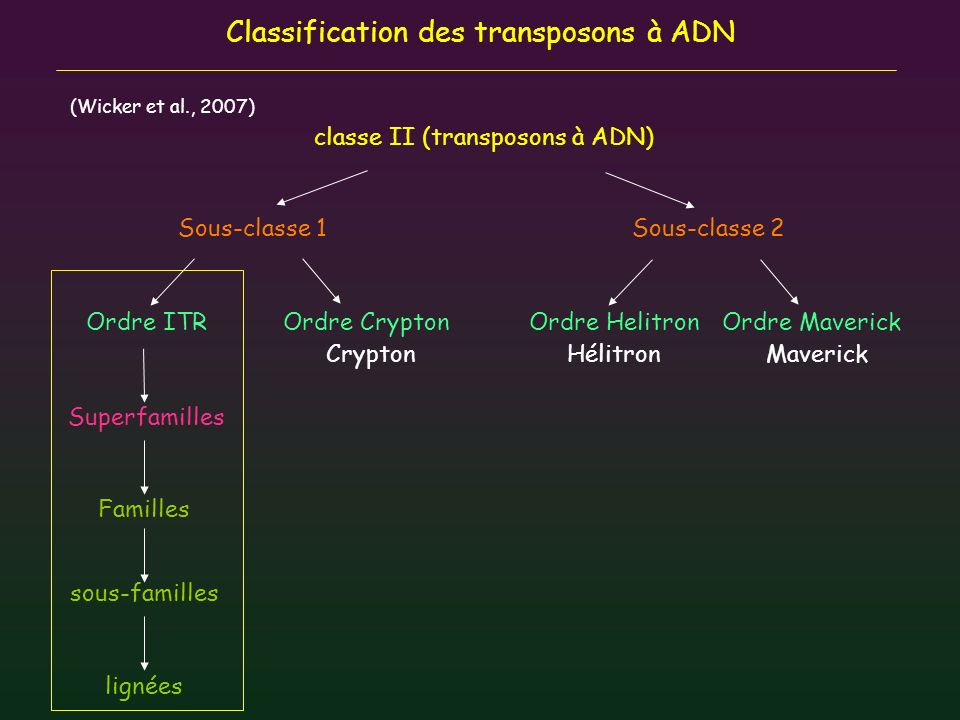 Classification des transposons à ADN