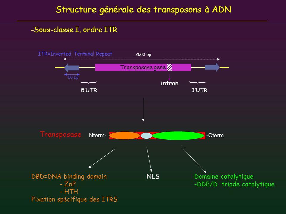 Structure générale des transposons à ADN