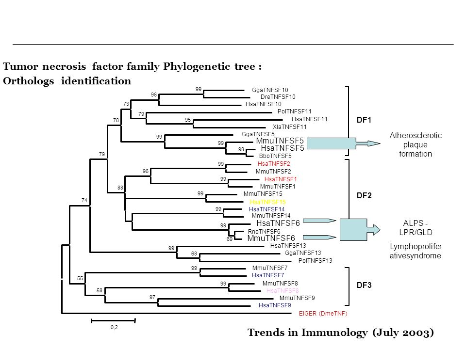 Tumor necrosis factor family Phylogenetic tree :
