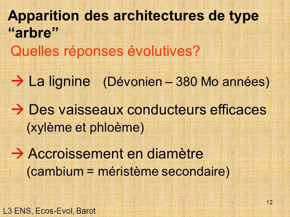 Apparition des architectures de type ''arbre''