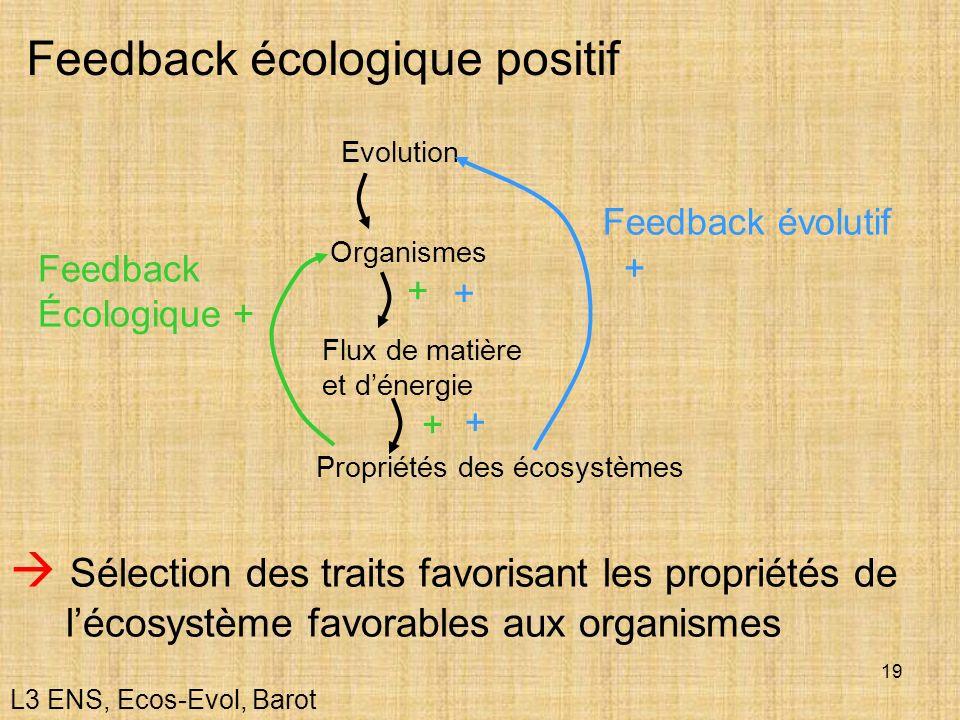 Feedback écologique positif