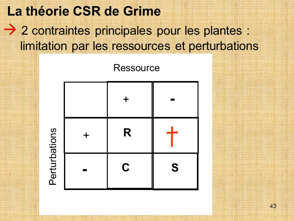 La théorie CSR de Grime  2 contraintes principales pour les plantes : limitation par les ressources et perturbations.