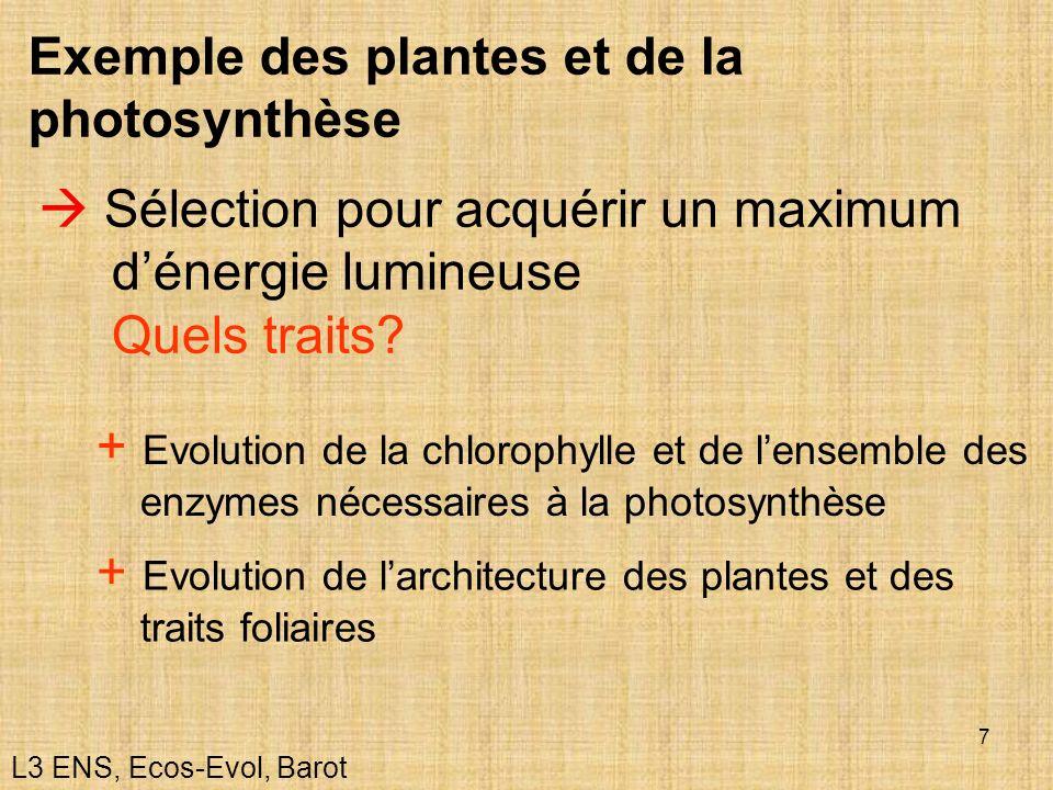 Exemple des plantes et de la photosynthèse