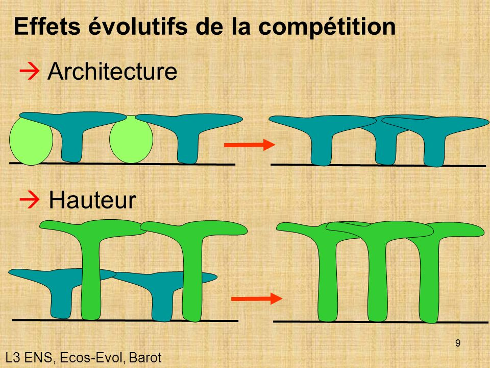 Effets évolutifs de la compétition