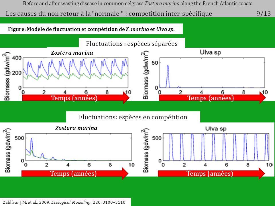 Figure: Modèle de fluctuation et compétition de Z. marina et Ulva sp.