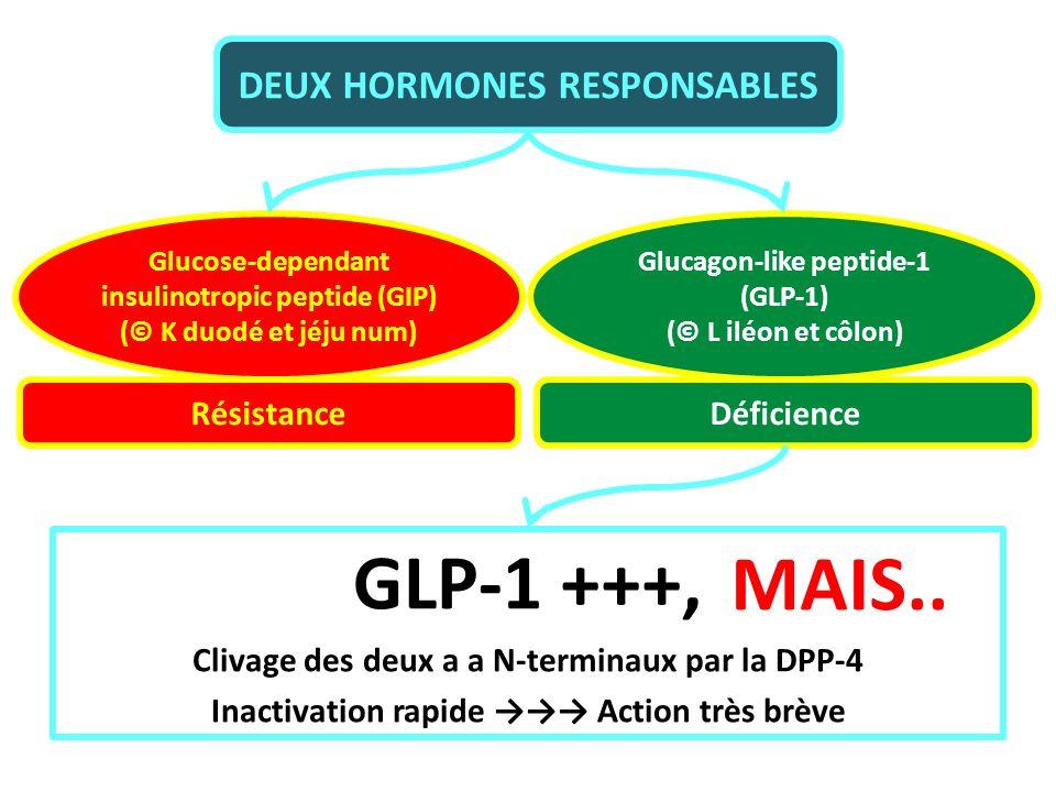 GLP-1 +++, MAIS.. DEUX HORMONES RESPONSABLES Résistance Déficience
