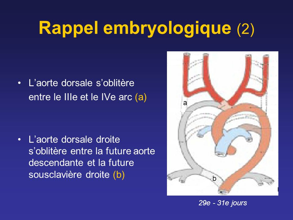 Rappel embryologique (2)