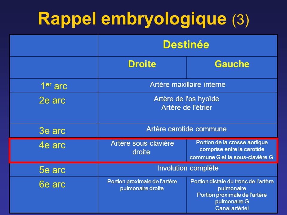 Rappel embryologique (3)