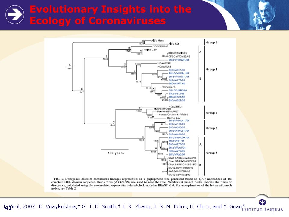 Evolutionary Insights into the Ecology of Coronaviruses