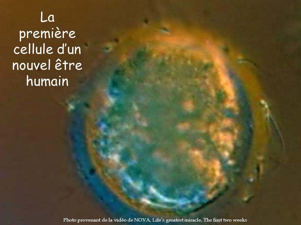La première cellule d'un nouvel être humain