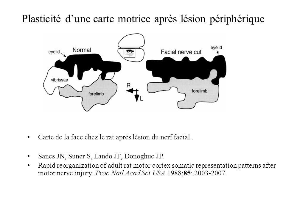 Plasticité d'une carte motrice après lésion périphérique