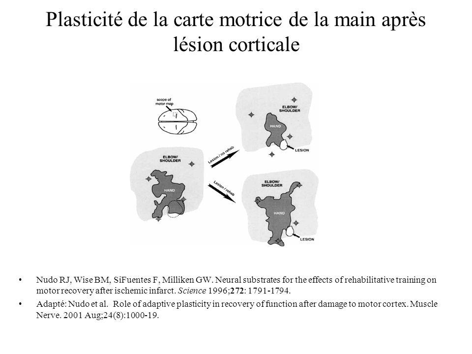 Plasticité de la carte motrice de la main après lésion corticale