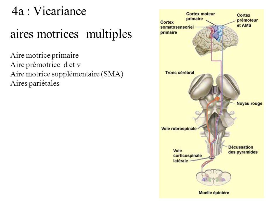Battaglia et al. Cerebral cortex, 2003, 13:1009-1022.