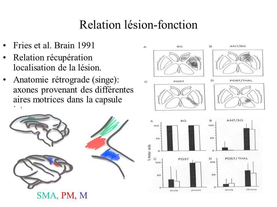 Relation lésion-fonction
