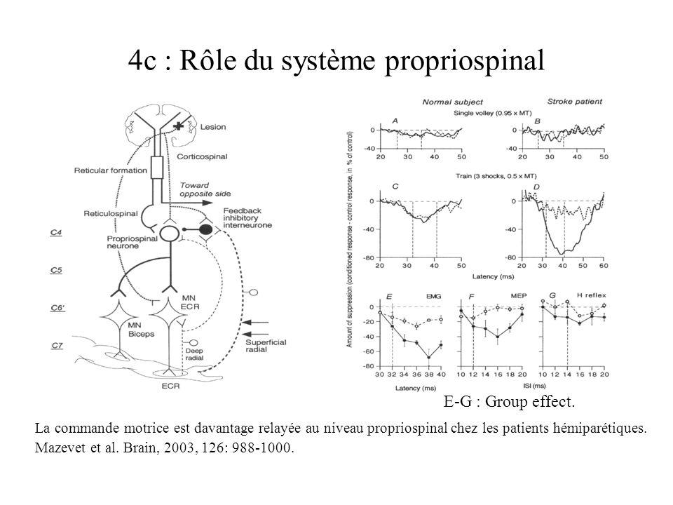 4c : Rôle du système propriospinal