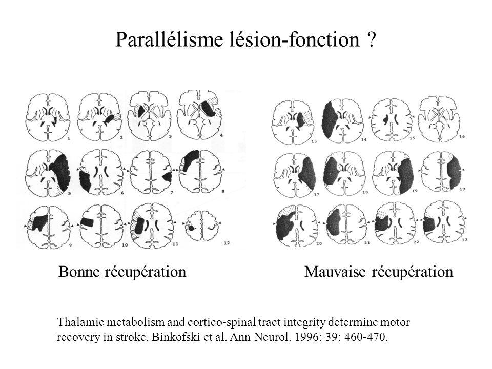 Parallélisme lésion-fonction