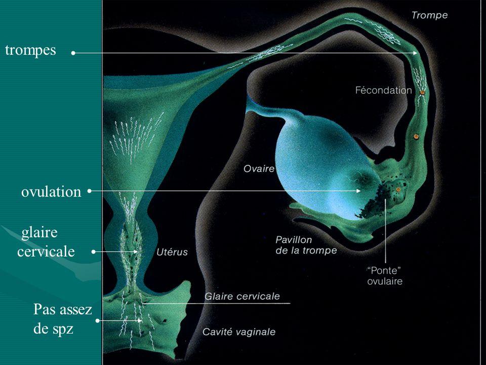 trompes ovulation glaire cervicale Pas assez de spz