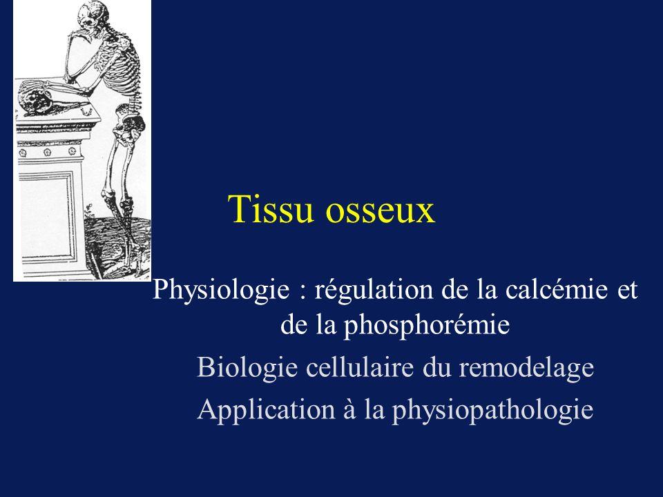 Tissu osseux Physiologie : régulation de la calcémie et de la phosphorémie. Biologie cellulaire du remodelage.