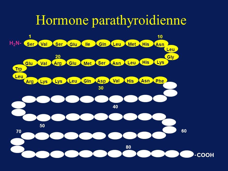 Hormone parathyroidienne