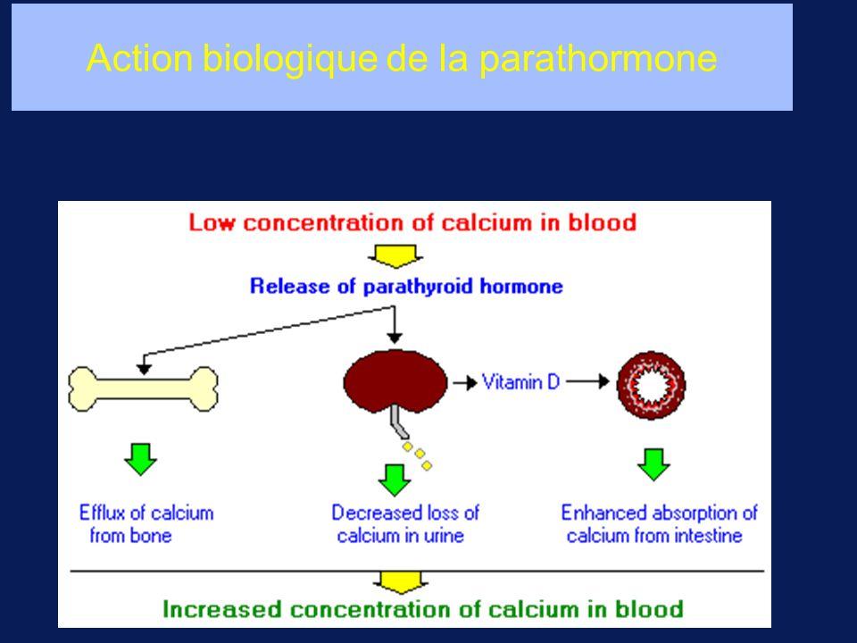 Action biologique de la parathormone